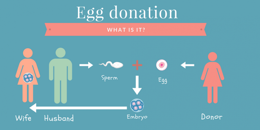 What is egg donation