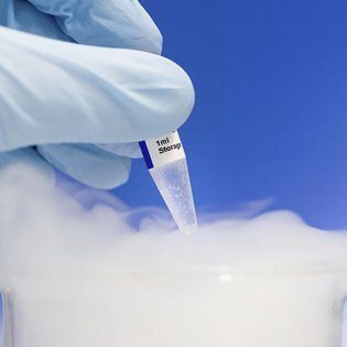 Egg Cryopreservation